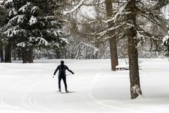 Cross country skiing in alps. In winter snow season Stock Image