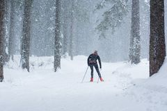 Cross country skiing in bad weather. Cross country skier tackling bad weather conditions Stock Photography