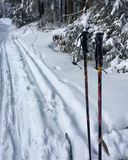 cross-country skiing in beautiful Nationalpark Harz in Germany, Europe royalty free stock photo