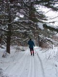 Cross Country Skiing through forest Royalty Free Stock Images