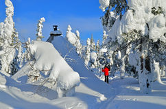 Cross country skiing in forest Stock Image