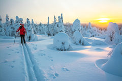 Cross Country Skiing In Sunset Stock Photography