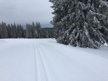 Cross-country skiing snow track Royalty Free Stock Photo