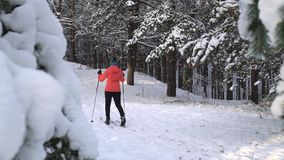 Cross country skiing stock footage