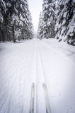Cross-country skiing in a snowy forest Royalty Free Stock Image