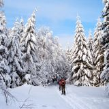 Cross country skiing tourists Royalty Free Stock Images