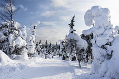 Cross-country skiing trail. Next to mountain in lapland called Valtavaara, Kuusamo, Finland Stock Photography