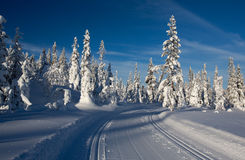 Cross country skiing trails. Royalty Free Stock Image