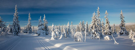 A winter landscape, decorated with cross country skiing trails. Royalty Free Stock Images