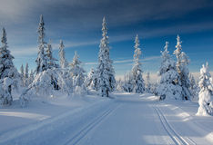 A winter landscape, decorated with cross country skiing trails. stock images