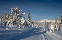 A winter landscape, decorated with cross country skiing trails. royalty free stock photos
