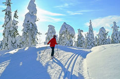 Cross country skiing. Woman cross country skiing in Lapland Finland Royalty Free Stock Photography