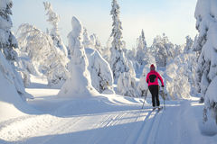 Cross country skiing. Woman cross country skiing in Lapland Finland Royalty Free Stock Image