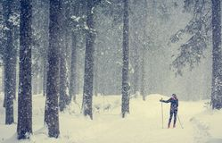 Cross country skiing through the woods. Cross country skier skiing pausing to find direction in bad weather Royalty Free Stock Photos