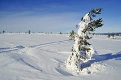 Cross Country-Skiwanderweg Stockfotos