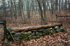 Cross Country-springender Zaun Stockfotos