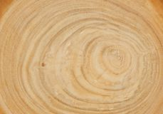 Cross cut wood texture Royalty Free Stock Photography