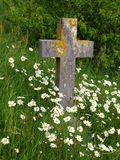 Cross gravestone. Old and forgotten cross gravestone with wild daisies growing Stock Photos