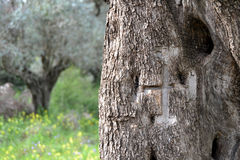 Cross  of the Holy Land Royalty Free Stock Image