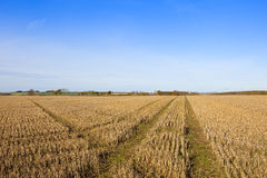 Cross lines in straw stubble Royalty Free Stock Images