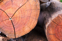 Cross log section. Stock Images