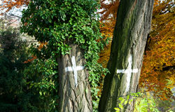 Cross marked. With white crosses marked trees royalty free stock photos
