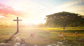 Cross in meadow and lamb on sunset. Soft focus and Silhouettes of man raise hand up worship God against blurred sunset sky stock images