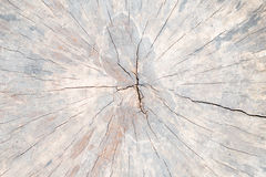 Cross old log section. Royalty Free Stock Photos