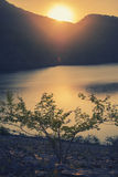 Cross Process sunset over lake and tree Stock Image