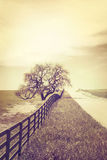 Cross-Processed Oak and Country Road. A fence and old oak tree along an empty country road. Image is done in a retro style with cross-processed colors royalty free stock image