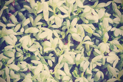 Cross processed photo of cress. Stock Photography