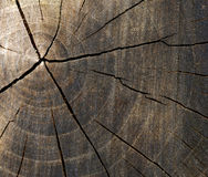 Cross section. Of tree close up Royalty Free Stock Photography