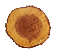 Cross section of acacia tree trunk isolated Royalty Free Stock Images