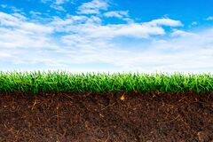 Free Cross Section Brown Soil And Green Grass In Underground. Stock Photo - 191432960