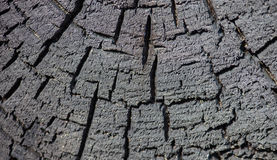 Cross section of the burnt tree trunk Royalty Free Stock Photo