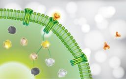 Antibody blocking cell receptor on white grey background vector illustration