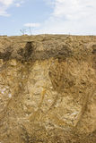 Cross section of dirt 2 Royalty Free Stock Image