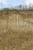Cross section of dirt 4 Stock Photo