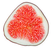 Cross-section of fig tree fruit Royalty Free Stock Photo