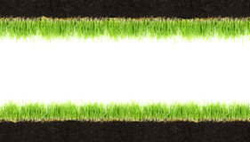 Cross-section frame of soil and grass Stock Image
