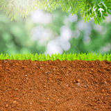 Cross section of grass and soil. Against green bokeh and leaves Royalty Free Stock Photos