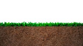 Cross section of grass and soil stock photo