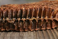 Cross-section through the interior of an old honeycomb. Royalty Free Stock Photo