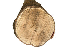Cross Section of Log on White Stock Images