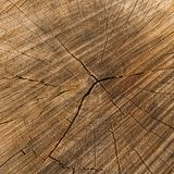 Cross section of the oak trunk Royalty Free Stock Image