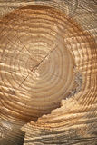 Cross Section Of Old Tree With Annual Rings Royalty Free Stock Image