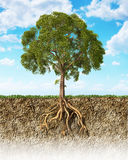 Cross Section Of Soil Showing A Tree With Its Roots. Stock Image