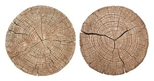 Free Cross Section Of Tree Trunk Royalty Free Stock Photos - 101236068