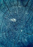 Cross-section of the old tree. background of wooden plank texture wall with selected tone color. Abstract background of