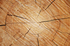 A cross section of old tree trunk Stock Photos
